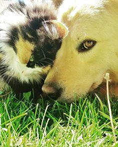 Nikita & Lupin