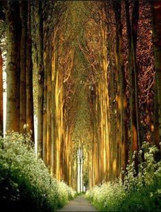 Tree Tunnel, Belgium