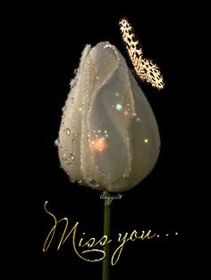 Miss you gif tulip butterfly