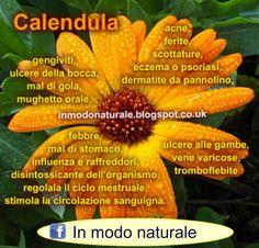 Questo fiore e' conosciutissimo per i suoi benefici sulla pelle, pur avendo altri notevoli proprieta' benefiche per la salute.   ...