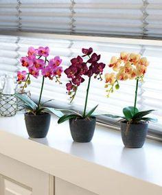 Phalaenopsis 32 cm - Kunstplant | Accessoires | Bakker Hillegom