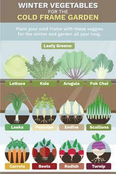 Weather Vegetable GrowingCold Weather Vegetable Growing Vintage Dig For Victory Grow Vegetables British WWII War Poster in Modern Cold Frame Gardening, Indoor Vegetable Gardening, Home Vegetable Garden, Organic Gardening Tips, Herb Gardening, Container Gardening, Vegetable Planters, Texas Gardening, Gardening Vegetables