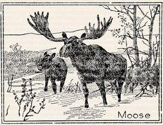 Moose with Antlers Illustration - Vintage Animal Clip Art Image – Digital Stamp - Printable Transfer– instant download clipart - CU OK