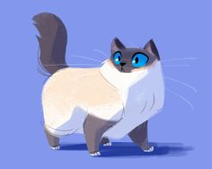 Daily Cat Drawings — 474: Birman