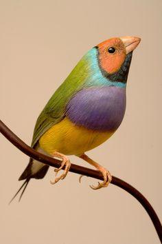 http://www.cuteanimalnames.com/the-most-beautiful-bird-names.html