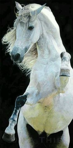 No words are needed. Just utter silence to gape at how wonderfully God displays his power and grace in the horse.