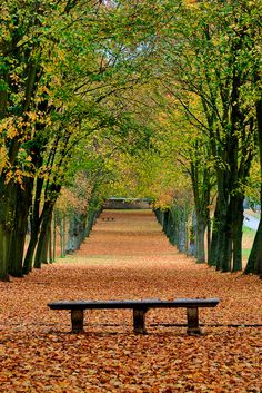 -ốc- Autumn in the park of Chamarande, France.-ốc-Autumn in the park of Chamarande, France. Light Background Images, Photo Background Images, Photo Backgrounds, Fall Background, Beautiful Landscape Wallpaper, Beautiful Landscapes, Landscape Photography, Nature Photography, Spring Photography