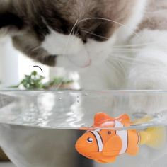 Robotic Fish Toyfor cats, dogs.$10.90, includes shipping worldwide
