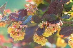 vardagens guldkorn: trädgård