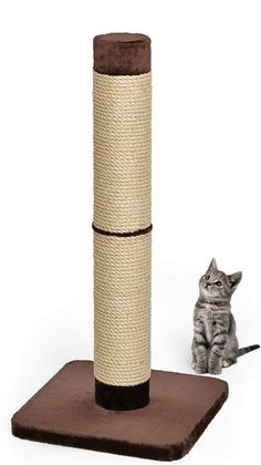 MidWest Homes for Pets Curious Cat Cube Cat House / Cat Condo Forte Scratching Post Best Cat Scratching Post, Big House Cats, Cat Cube, Huge Cat, Sisal Rope, Curious Cat, Cat Condo, Cat Furniture, Cool Cats