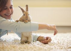 The Best Toys to Keep Your Rabbit Entertained and Engaged