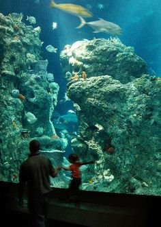 Great Ocean Tank at the South Carolina Aquarium. Fun place to take the kids