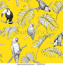 Image result for black and white drawing of tropical bird