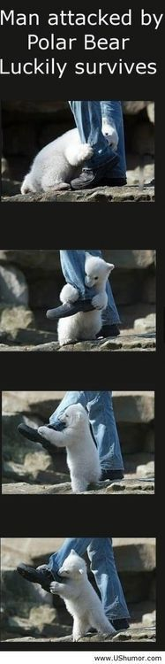 cutest bear attack ever