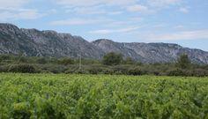 Visita ao Domaine des Terres Blanches, para conhecer os vinhos da AOP Les Baux de Provence, uma parte da Provence focada em vinhos tintos!