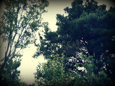 Desde otra estrella  caen gotas de plata  Se respira  el cambio  de fronteras,  de la humedad al viento,  del viento a las raíces.  Algo sordo, profundo,  trabaja bajo la tierra  almacenando sueños.  La energía se ovilla,  la cinta  de las fecundaciones  enrolla  sus anillos.  Modesto es el otoño  como los leñadores.  Cuesta mucho  sacar todas las hojas  de todos los árboles  de todos los países.  La primavera  las cosió volando  y ahora  hay que dejarlas  caer como si fueran  pájaros…