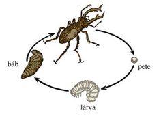 "Képtalálat a következőre: ""bokor részei"" Nature Study, Biology, Teaching, Education, Google Search, Nature, World Discovery, Insects, Animaux"