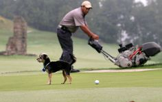Chasing Off Wildlife, With Course Etiquette - NYTimes.com great story about dogs working on golf courses.