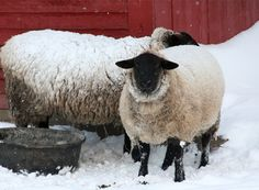 Images from Yankee Magazine's 2011 Winter Photo Contest - Yankee Magazine