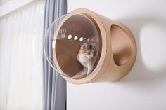 Wood Cat Wall Perch with Clear Bubble | Clear Home Design Modern Cat Furniture, Pet Furniture, Cool Cat Beds, Cat Wall Shelves, Wood Cat, Dog Clothes Patterns, Pet Beds, Pet Accessories, Big Cats