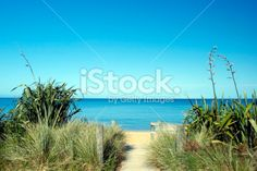 NZ Flax in bloom, Tussock, Sea and Sand Royalty Free Stock Photo Wooden Path, Abel Tasman National Park, New Zealand Beach, Beach Fun, Beautiful Beaches, Wilderness, Paths, National Parks, Scenery