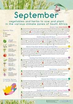 Growing your own organic delicious food is most rewarding! These educational Moonbloom posters will help guide you. Planting Vegetables, Vegetable Garden, South Africa Honeymoon, Grow Your Own, Delicious Food, Herbs, Gardening, Posters, Organic