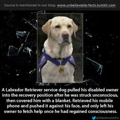 God bless this dog and the folks who trained him or her.
