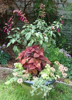 nice planter grouping, Wendy's Wish salvi, coleus, verbena, and lemon licorice...