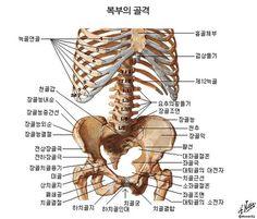 골반뼈 구조 - Google 검색