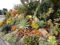 Small slope areas are great for succulents landscapes because the slope angle shows off the shapes and colors.