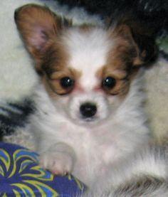 Past MerryMaker puppy
