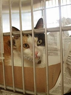 ***SAFE*** ★★Loran Slama says beautiful Ambrosia is safe - Jillian of OCSmallPaws is the rescuer. Hooray!★★ Downey CA: Begging! RE: Still alive but in severe ...