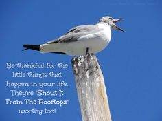 Be thankful for the little things quote