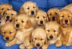 image de chien - Recherche Google