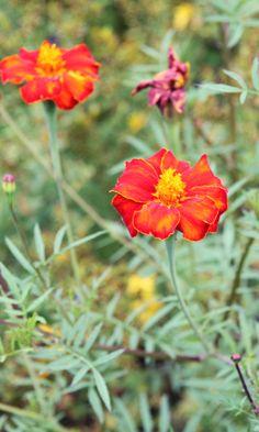 You will find a lot of pretty small flowers in the flower beds of Rosenborg. Copyright: Rosenborg Castle / Rosenborg Slot
