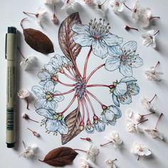 IdeaFixa » Fauna e flora bem representados
