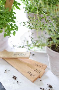 Simple DIY herb markers add a little extra charm to potted fresh herbs | A Burst of Beautiful