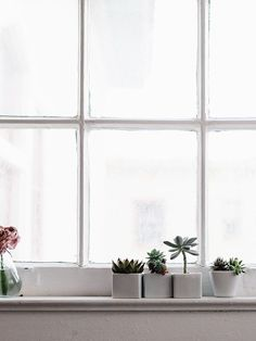 window detail—vintage panes and a sillful of succulents at Cindy and Seth's by Alice Gao of Lingered Upon