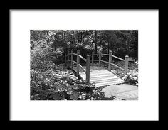 toledo ohio botanical garden, bridge, path, hosta,  nature, black and white, michiale schneider, photography, interior design, framed art, wall art