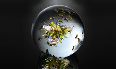 Glass Paperweights for Collectors   Paperweights have been delighting discerning collectors for over 100 ...