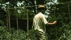 (Untitled) 1970 Dr. TC Boring Greenwood Mississippi