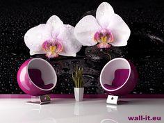 Ścienna fototapeta białe orchidee