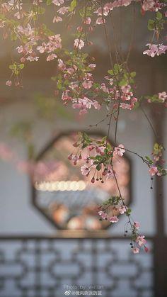 Flower Background Images, Wallpaper Nature Flowers, Plant Wallpaper, Flower Phone Wallpaper, Iphone Background Wallpaper, Scenery Wallpaper, Flower Backgrounds, Aesthetic Backgrounds, Aesthetic Iphone Wallpaper