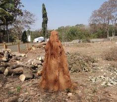 Getting rid of termites is a daunting process. In this post we cover the various proven methods to deal with the menace of termite infestation. How To Get Rid, News