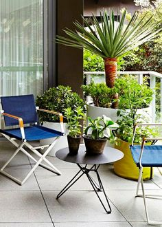 Our green thumb friends at Garden Life recently visited Harold Park to share their expertise in creating successful apartment gardens. Their top tip for designing your balcony or courtyard space is to avoid lots of small pots. It's better to go big and make one bold gesture.