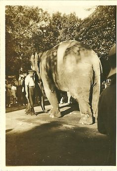 Durban - Mitchell Park'Nellie the Elephant' . Kwazulu Natal, Wwii, South Africa, Elephant, Horses, Park, City, Places, Pictures