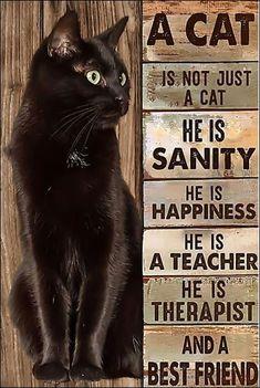 Crazy Cat Lady, Crazy Cats, I Love Cats, Cool Cats, Regard Animal, Black Cat Art, Black Cats, Cat Posters, Dog Poster