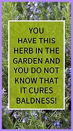You have this herb in the garden and you do not know that it cures baldness – Herbal Medicine Book Holistic Remedies, Holistic Healing, Natural Healing, Health Remedies, Home Remedies, Natural Remedies, Health Guru, Health And Nutrition, Gut Health