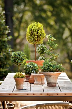 Mix and Match Topiary Tree Sizes - Potted Topiary Trees for Winter - Southernliving. Combine several English ivy topiaries and a clipped lemon cypress to accent a garden table. Mix spirals, globes, columns, and lollipop shapes of varying heights. Unify the look with terra-cotta pots.    Mix and Match English Ivy Topiary Trees