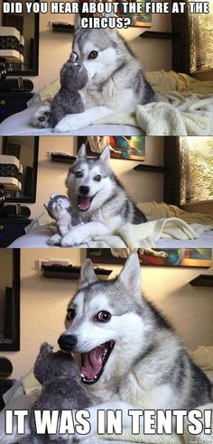 Dog Puns That Will Instantly Brighten Your Day